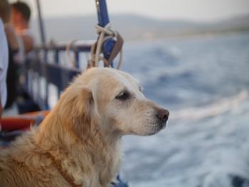 Fähre Stockholm-Helsinki Tallink Hund an Bord